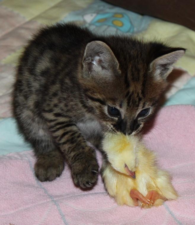 dürfen katzen rohe eier essen